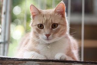 Cat-3081861_1920