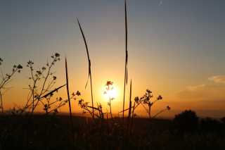 Sunset-3369443_1920